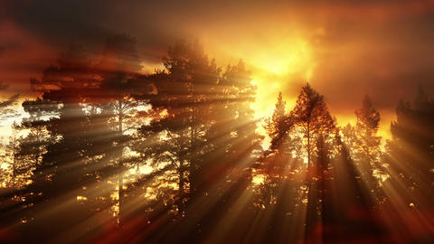 Evening sun in the forest Animation