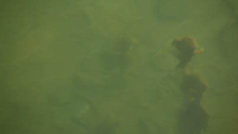 Insects in the water Footage