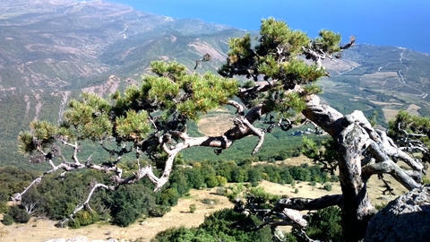 Magnificent Crimea. View from decorated with old pine mountains to blue sea Footage