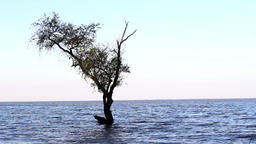Tree on the water Footage
