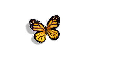 Orange Butterfly Flying on a Blue Background Animation