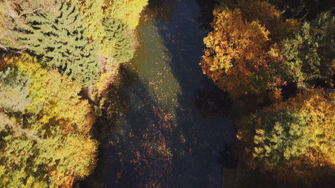 Aerial drone view, over the autumn forest and the river (Austria) Archivo