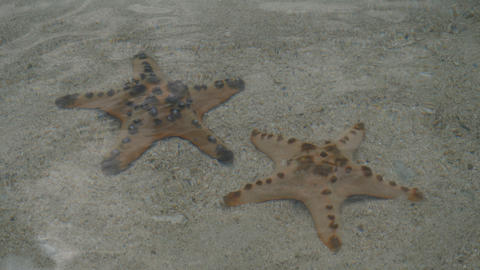 Starfishes in clear water in Port Barton island, Philippines Live Action