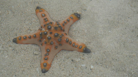Starfishe in clear water in Port Barton island, Philippines Live Action
