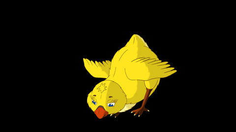 Yellow Chicken Stands and Pecks Alpha Matte Animation