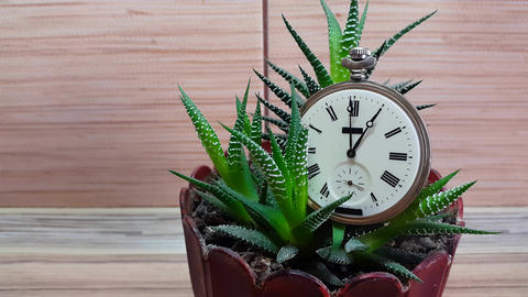 timelaps. Clock In Flower Against The Background Of A Wooden Wall Image