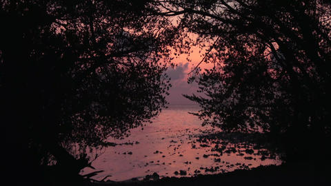 Indian Ocean, trees against a background of a pink sunset. Maldives video Footage
