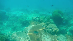 Diving under water among corals of Gili Air Island Footage