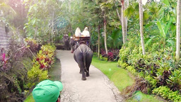 Elephant Tour,Bali ภาพวิดีโอ