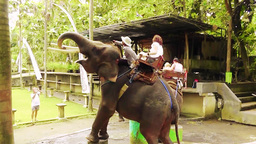 Trained elephant is performing trick,Bali Filmmaterial