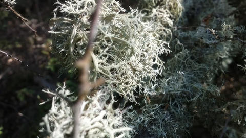 In realm of fine mosses and lichens Footage