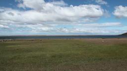 Mutton sheep jumbuck mammal animal on ocean coast of Patagonia Footage