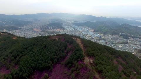 Cheonjusan Mountain Jindallae Azalea Flower Blooming 07 Footage