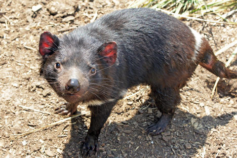 Wildlife of Australia フォト