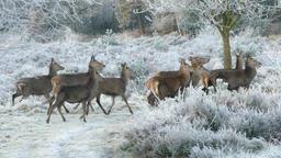 Reindeer deer animals nature wild 영상물