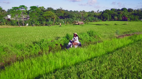 Aerial tracking on black nomad traveler woman riding motorbike in tropical Asian Footage