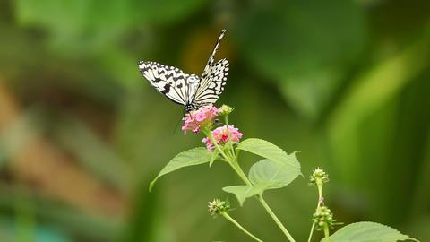 Butterfly Sitting On A Flower Archivo