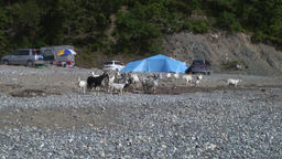 Wild tourism people with tents in green stony rocks coastline Footage