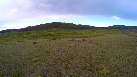 GOPRO - Drone tilt shot of horses in Australian alpine forest Archivo