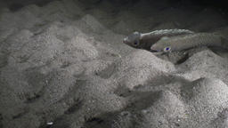 Fish underwater in ocean of wildlife Philippines Footage