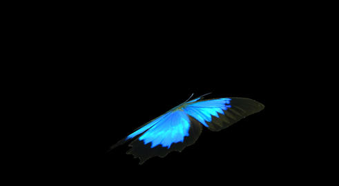Blue Butterfly Flying Animation 0