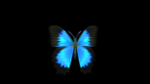 Blue Butterfly Flying Animation 1