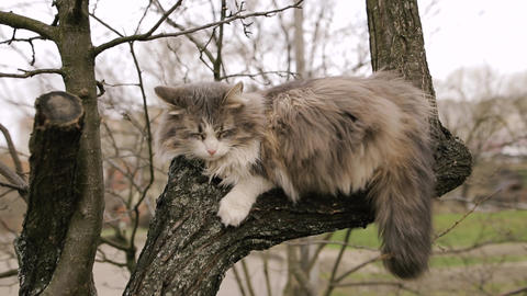 Homeless gray cat sleeping on a tree in the spring Footage