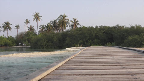 Bridge and beach, palm trees and shrubs. Maldives video Footage
