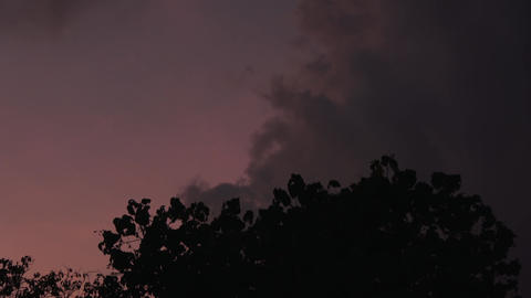 Silhouetted trees against a stormy sky. Maldives video Archivo