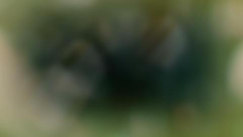 Natural Color Leaks 4K_03 CG動画素材