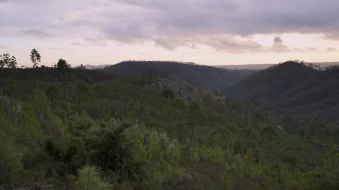 View of Portuguese burned forest fires in Vila de Rei, Portugal 영상물