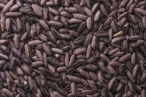 Background raw dark red purple rice, close up フォト
