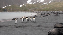 Group of important penguin communities bypasses their possessions in Antarctica Footage