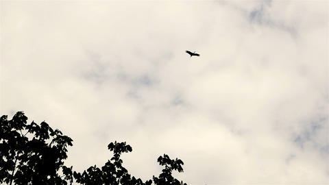 Stork flying in the sky. Beautifully hovers above the ground. Delayed shooting Archivo