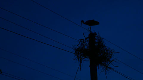 Silhouette a stork at night. Nest on an electric pole Archivo