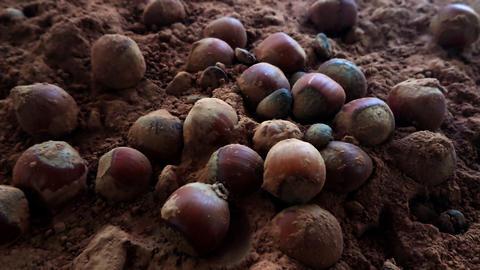 slow motion hazelnut fall in chocolate Animación