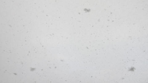 Grey texture of snowflakes flying in cold air in winter, snowfall background Footage