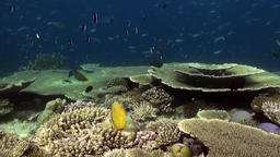 Underwater landscape of coral reef. Maldives Footage
