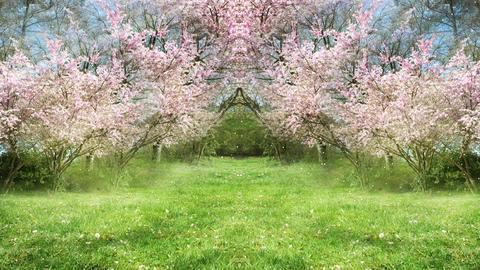 Springtime Sakura Garden GIF