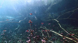 Underwater landscape and vegetation in lake cenote Footage