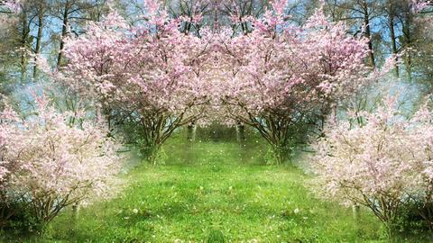 Springtime Sakura Garden Animation