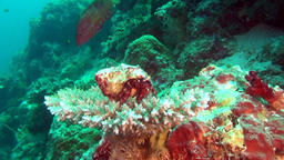 Hermit Cancer Soldier Crab on background of corals underwater in Maldives Footage