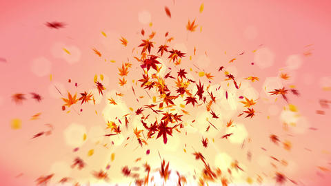 Autumn Leaves Falling on Yellow Background, Maple Leaf, Loop Glitter Animation 애니메이션