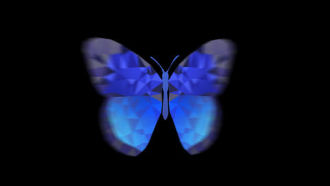 Butterfly_Mosacblue_Front Animation