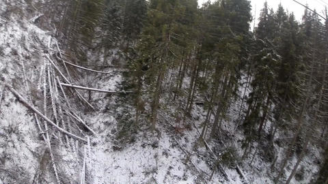 fallen trees on the mountainside Footage