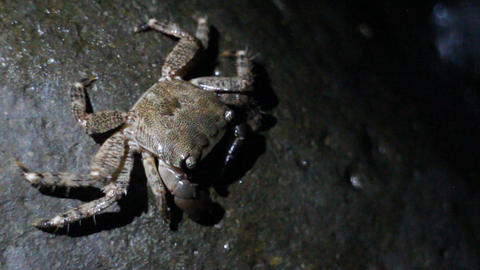 Crab with square head finds cigarette butt on beach Footage