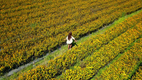 Aerial tracking happy woman having fun at orange marigold flowers field Archivo