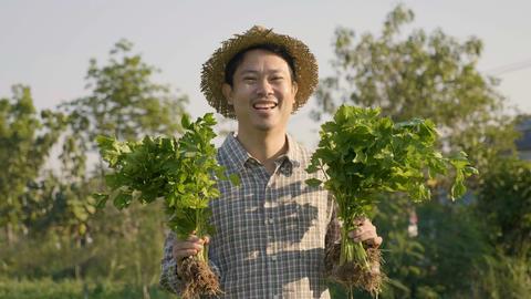 4K Happy Asian farmer harvest fresh vegetables at his farm Live Action