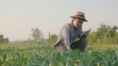 4K Asian farmer examining plant leaf, Tilt up shot Footage