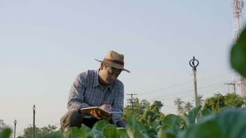 4K Asian farmer examining plant leaf, Pan shot Footage